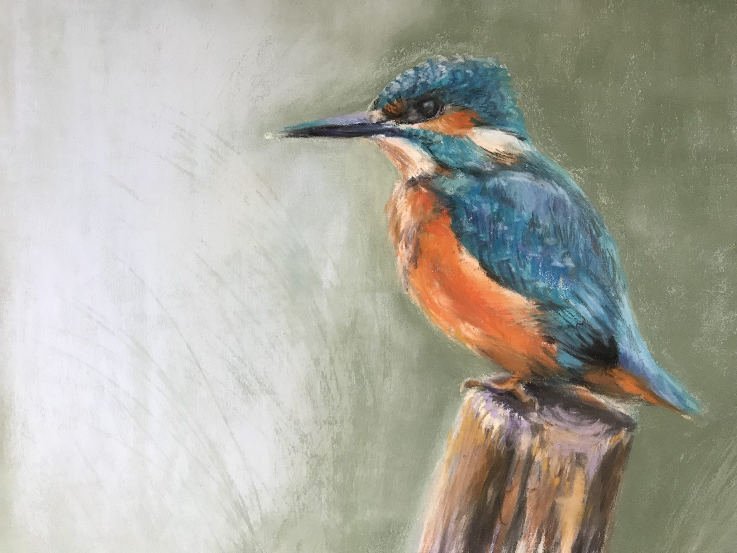 kingfisher painting pastel bird wildlife river