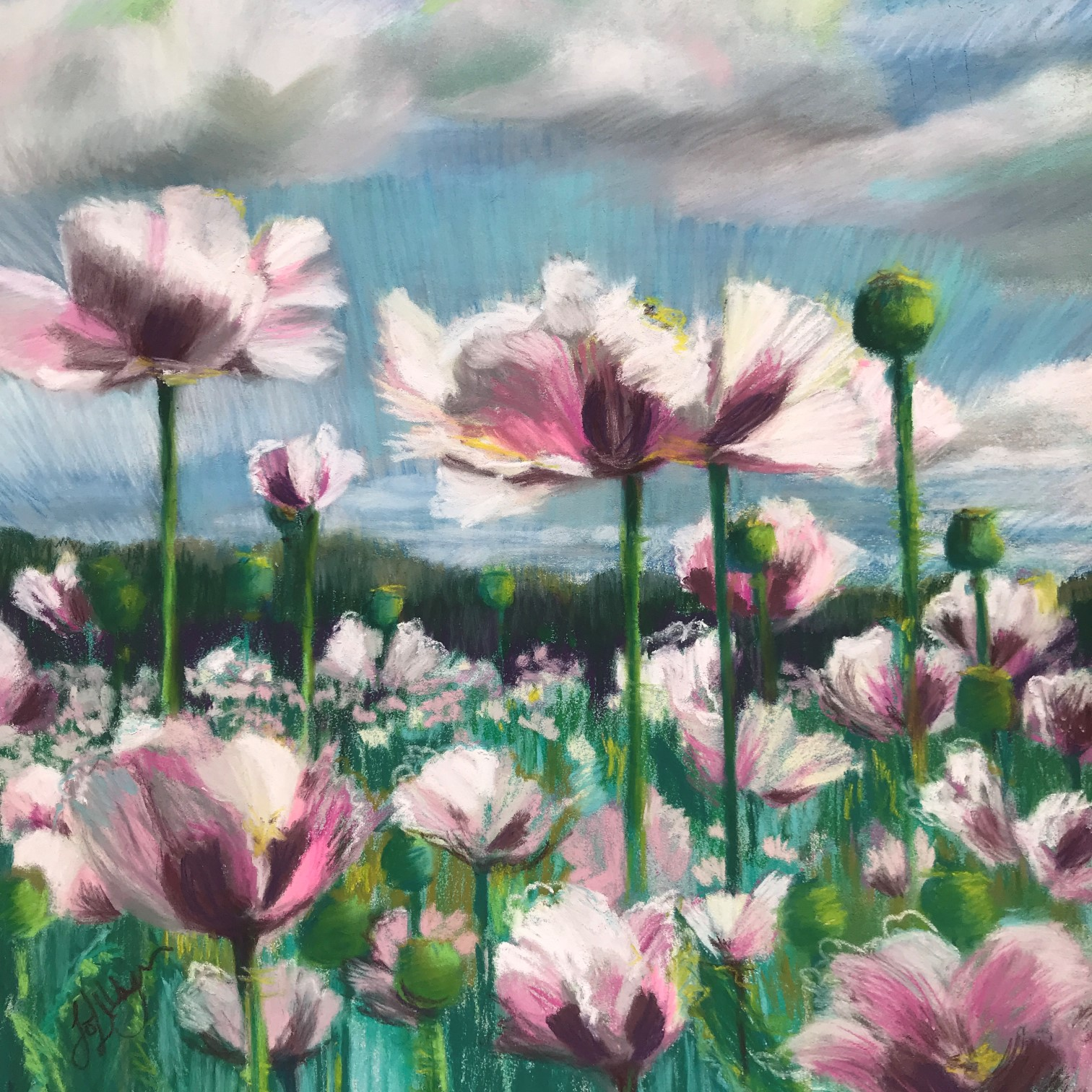poppies opium woodcote south stoke oxfordshire poppy flowers fields lilac pastel