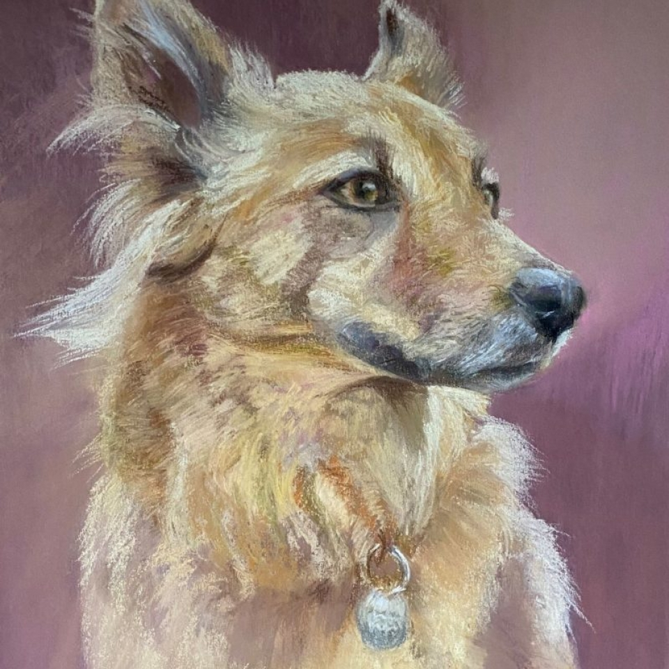 dog portrait petportrait pet commission art drawing gift